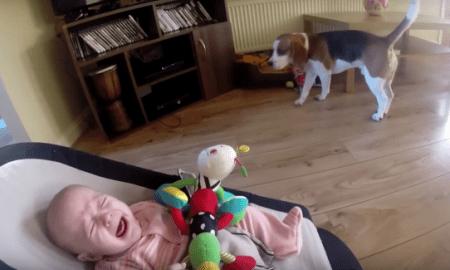 Perro hace llorar a bebé
