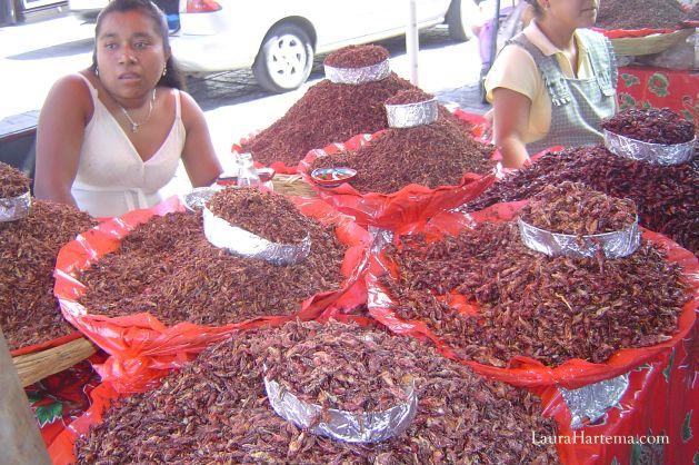 chapulines Oaxaca
