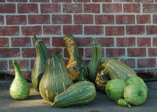 These are some of the beautiful squash and gourds harvested at Family Volunteer Day.