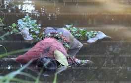 Encuentran cuerpo en arroyo de Las Choapas