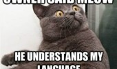 A funny meme of a cat with a surprised face reaction. Owner said meow, he understands my language.