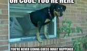 A dog that broke through a window. Oh cool, you're here. You're never gonna guess what happened.