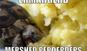 A turtle eating mashed potatoes. Ermahgerd mershed perderders. Omg mashed potatoes.
