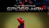 The Amazing Spider-Lizard meme. The Mwanza Flat-Headed Rock Agama Lizard has the same colors as Spider-Man's suit.