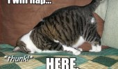 i-will-nap-here-thunk-lol-cat-sleeping-meme