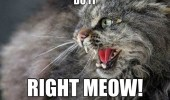 do-it-right-meow-now-cat-meme