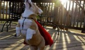 i-must-go-my-planet-needs-me-dog-superhero-cape-meme