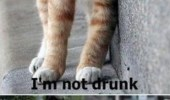 yes-im-not-drunk-funny-cat-kitten-meme