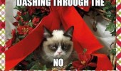 A grumpy cat Christmas card. Dashing through the No (snow).