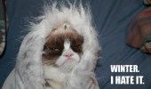 grumpy-cat-meme-winter-i-hate-it