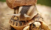 omg-slow-down-youre-gonna-get-us-killed-snail-riding-turtle-tortoise