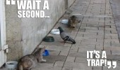 A funny picture of a pigeon that is going to eat a bowl of cat food, while two cats are waiting to attack.