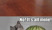 can-i-have-some-melon-no-its-all-mine-watermelon-cat-dog-meme
