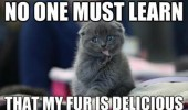 no-one-must-learn-my-fur-is-delicious-cat-meme