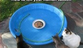 Cats surrounding a small swimming pool with their cat food in the middle.