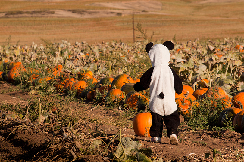 Toddler dressed up in cute costumes at the pumpkin patch.