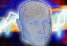 colloque-international-cerveau-a-tautavel