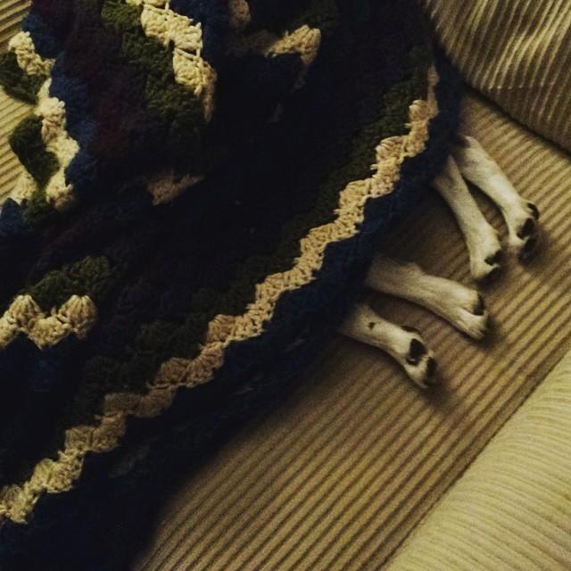 Dog blanket.