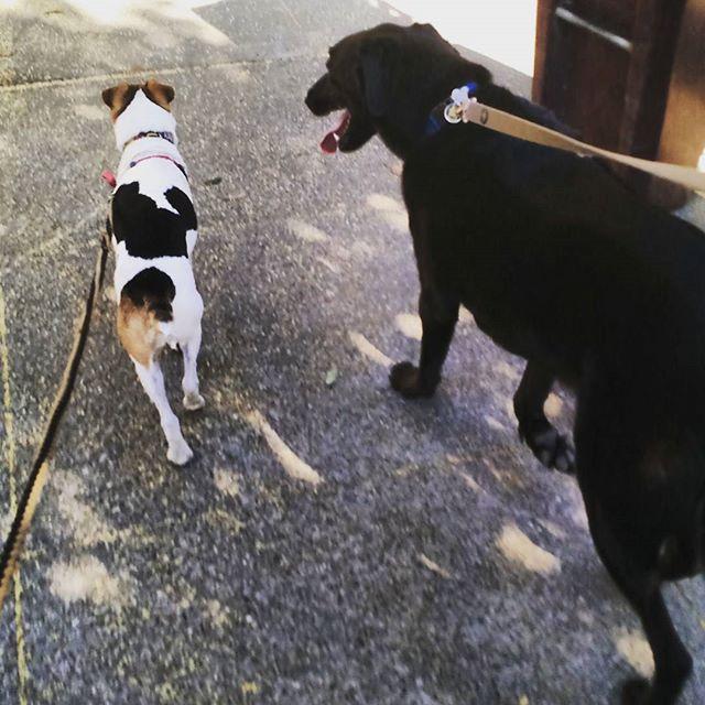 Doggie date.