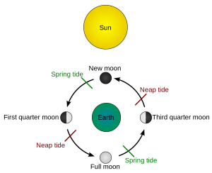 Diagram to illustrate the influence of the sun and moon on tides