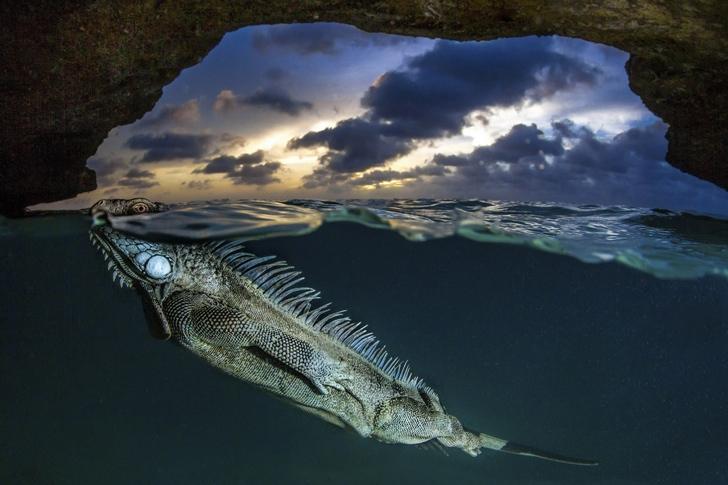 iguana-deniz-foto%C4%9Fraf.jpg?resize=728%2C485