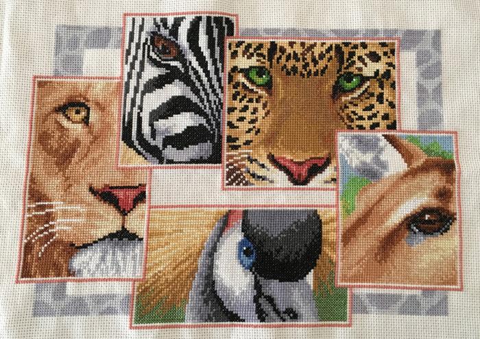 ogen van wilde dieren