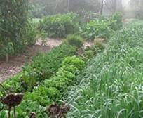 garden-fog-400x329