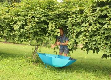 Hardy kiwifruit harvest into inverted umbrella