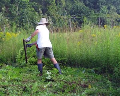 Me, scything my field