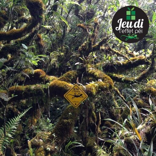 Eddy a pris cette photo dans une forêt tropicale entre la plaine des palmiste et un célèbre Piton de la Réunion. De quel Piton s'agit-il ?