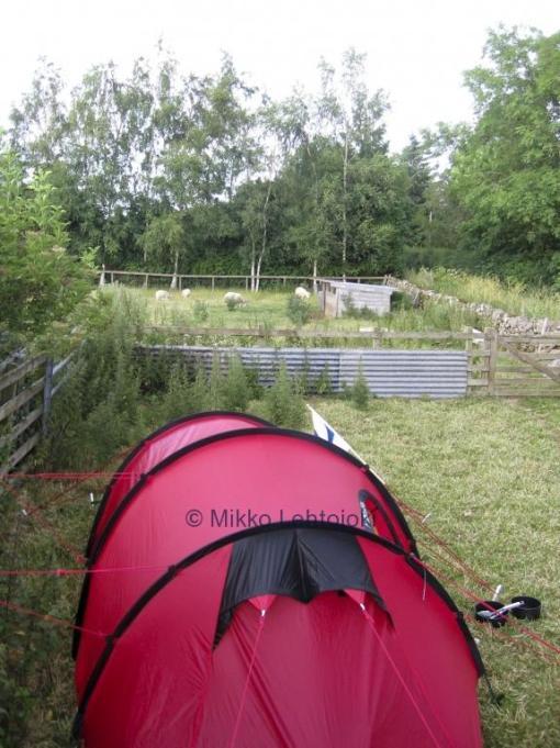 telttailemassa lammasaitauksessa