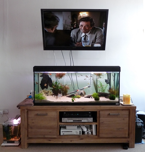 240 litre fish tank! With Columbo on the telly above and 20 litre fish