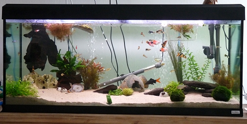 photo of our 240 litre fish tank. UK, 2010