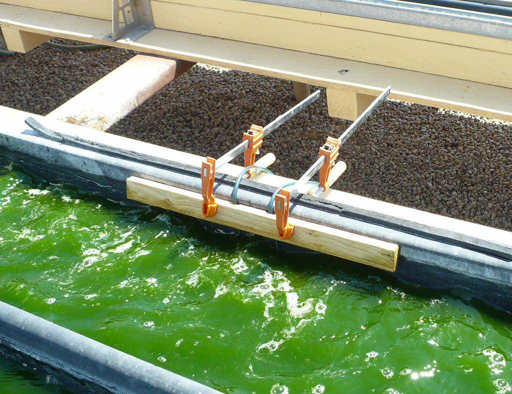 La plupart des biocarburants seraient moins verts que l'essence
