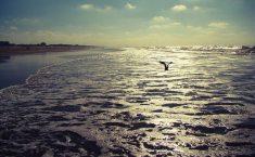 Mer du Nord : Statoil découvre 2 sites contenant des hydrocarbures