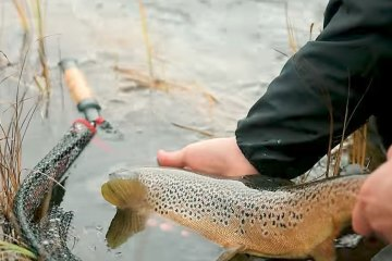 trout-fly-fish