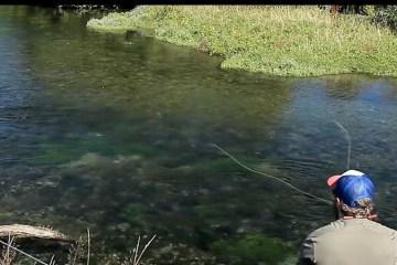 trout-newzealand