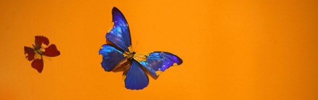 cropped-butterfly_802644i.jpg