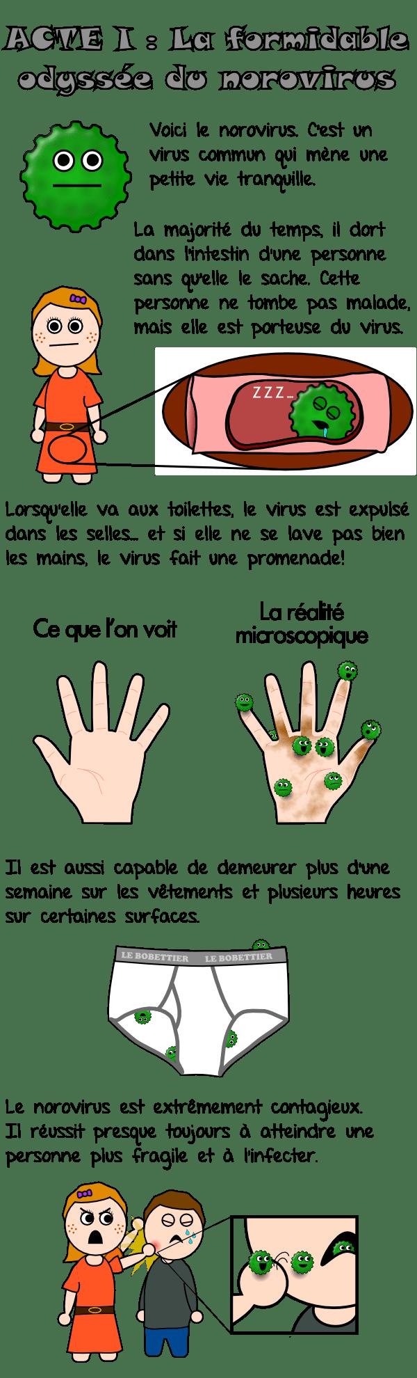 La formidable odyssée du norovirus (1)