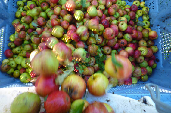 pommes les bruyères carré moyaux calvados normandie