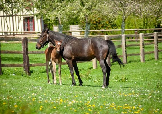 poulain cheval bruyères carré pays auge