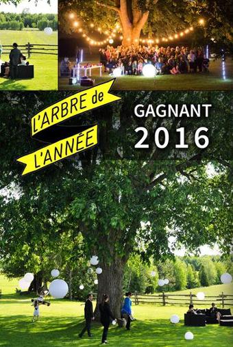arbre2016_gagnant2