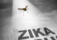 zika225