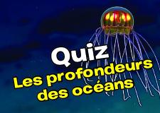 Quiz_Petit