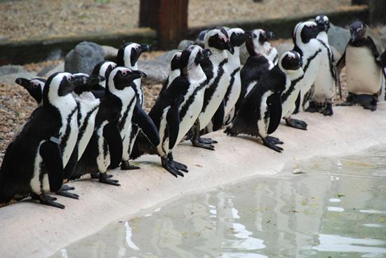 for Garden room london zoo