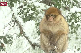 Admirez Ifrane sous la neige! (VIDEO)