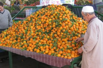 oranges-berkane