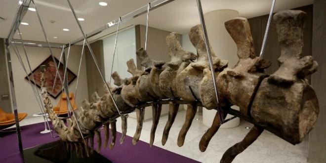 Mais qui a vendu la queue du dinosaure trouvée au Maroc?