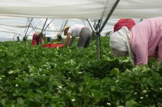 Maroc-Espagne: une enquête passionnante sur les travailleuses saisonnières