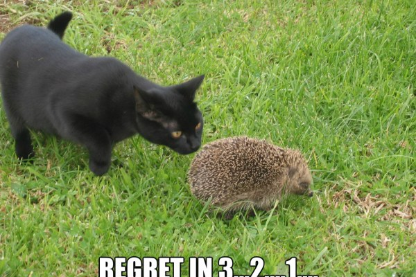 regret_o_1717375